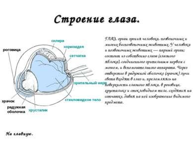 Строение глаза. ГЛАЗ, орган зрения человека, позвоночных и многих беспозвоноч...
