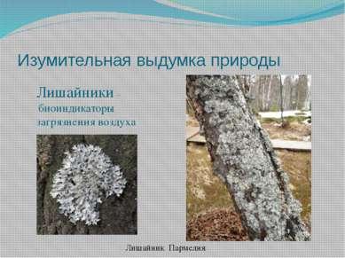 Изумительная выдумка природы Лишайник Пармелия Лишайники – биоиндикаторы загр...