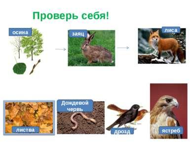 Проверь себя! заяц лиса осина ястреб дрозд листва Дождевой червь