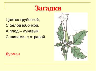 Загадки Цветок трубочкой, С белой юбочкой, А плод – лукавый: С шипами, с отра...