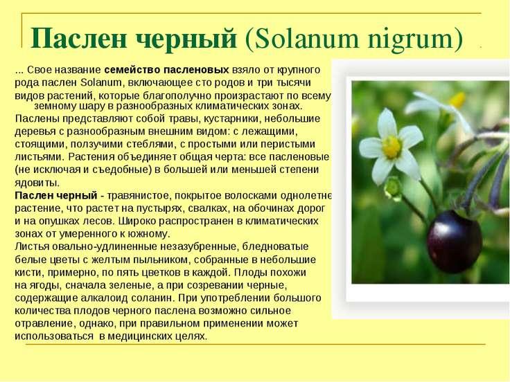 Паслен черный (Solanum nigrum) ... Свое название семейство пасленовых взяло о...