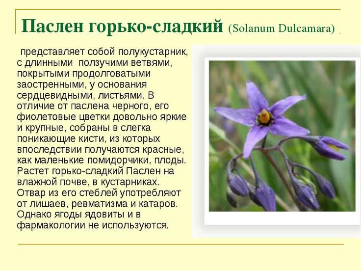 Паслен горько-сладкий (Solanum Dulcamara) представляет собой полукустарник, с...