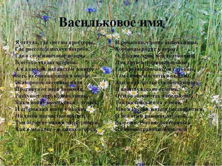 Васильковое имя Я оттуда, где светлы просторы, Где рассолом пахнут погреба, Г...