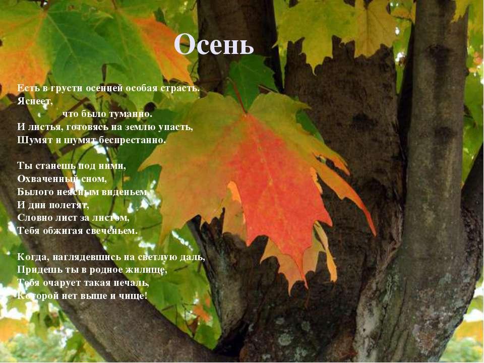 Осень Есть в грусти осенней особая страсть. Яснеет, что было туманно. И листь...