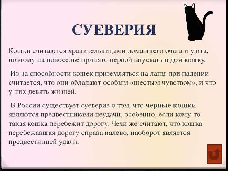 Пословицы и поговорки о кошках Кошки грызутся — мышам приволье. Слепая кошка ...