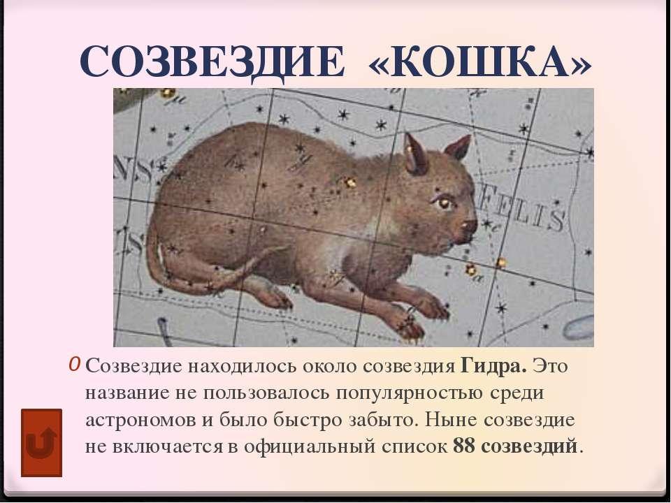 """Книги о кошках КШИ №11 """"МДКК"""""""
