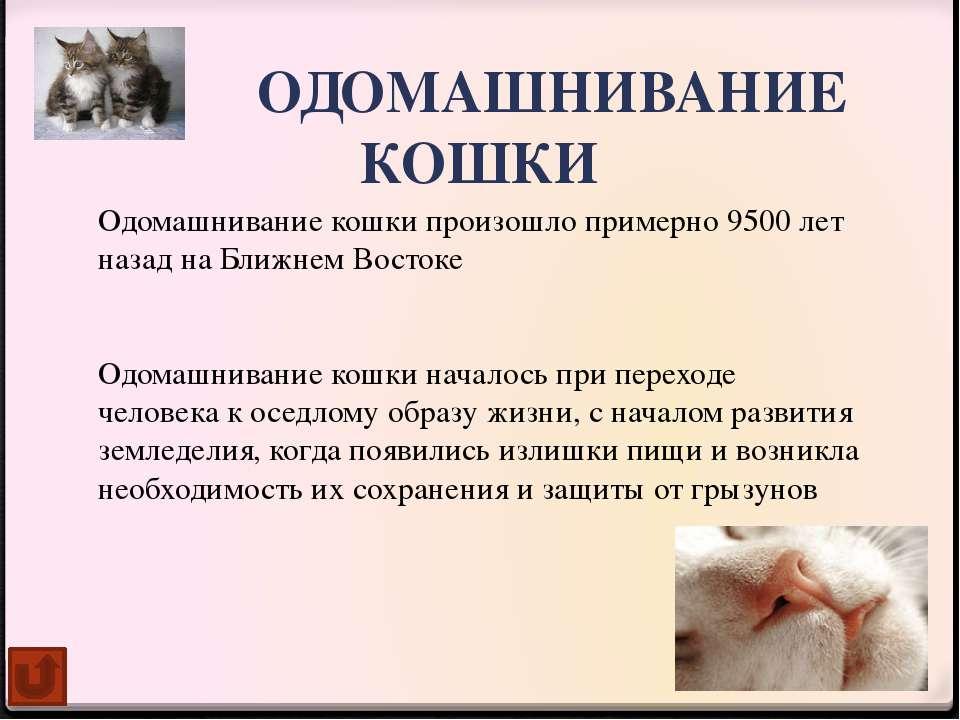 Однокоренные слова к слову «кот» Котик кошка кошачий котище котята котёнок ко...