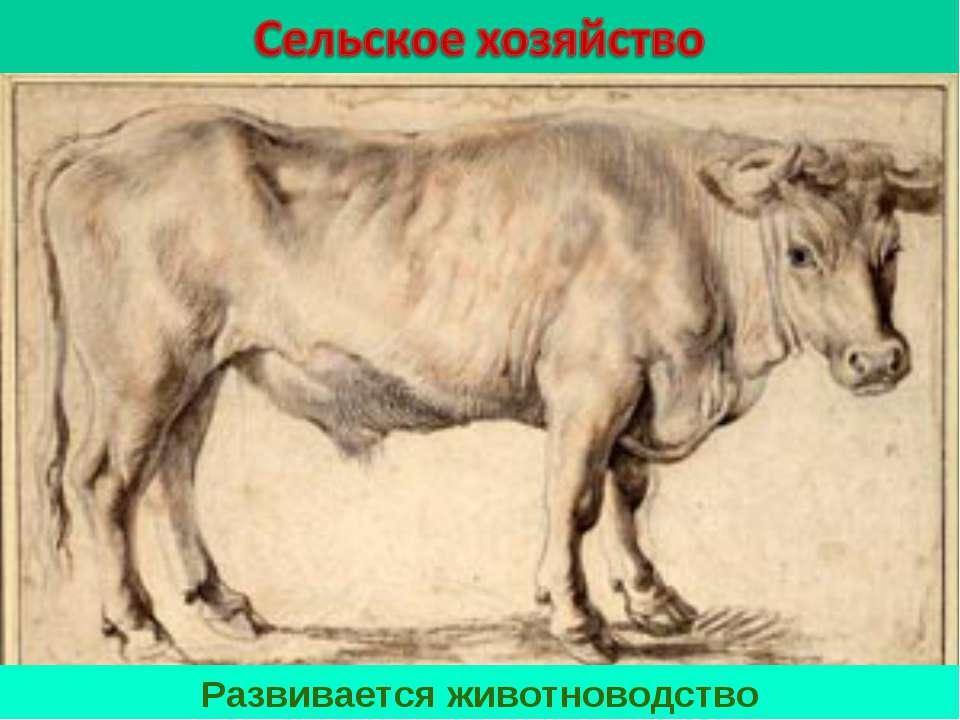 Развивается животноводство