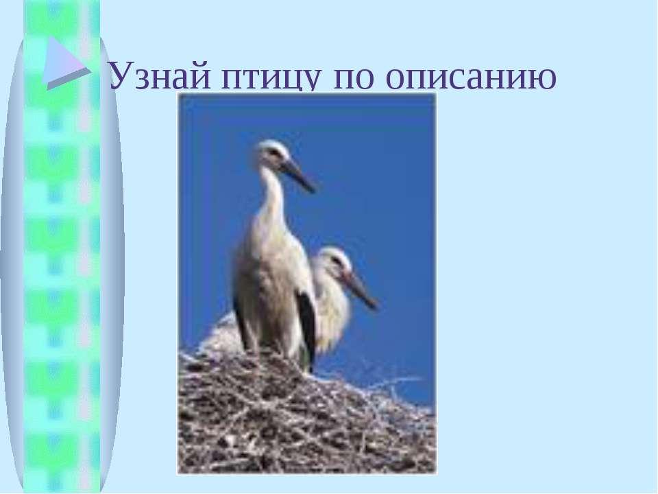 Узнай птицу по описанию