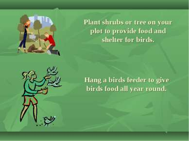 Plant shrubs or tree on your plot to provide food and shelter for birds. Hang...