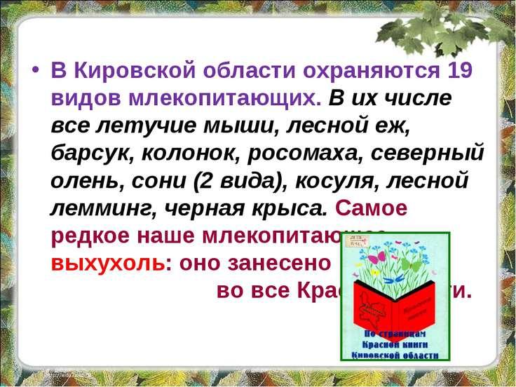 В Кировской области охраняются 19 видов млекопитающих. В их числе все летучие...