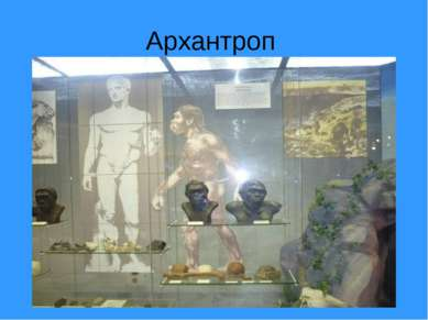 Архантроп