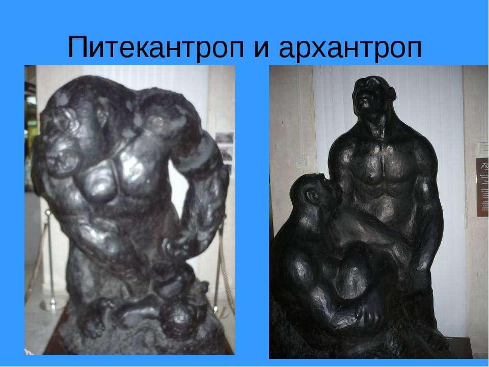 Питекантроп и архантроп