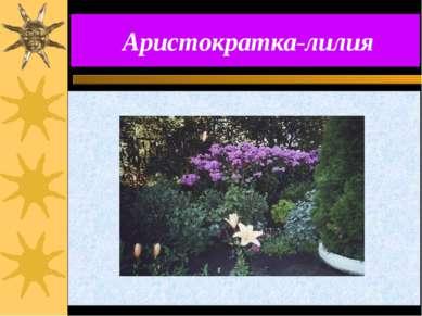 Аристократка-лилия