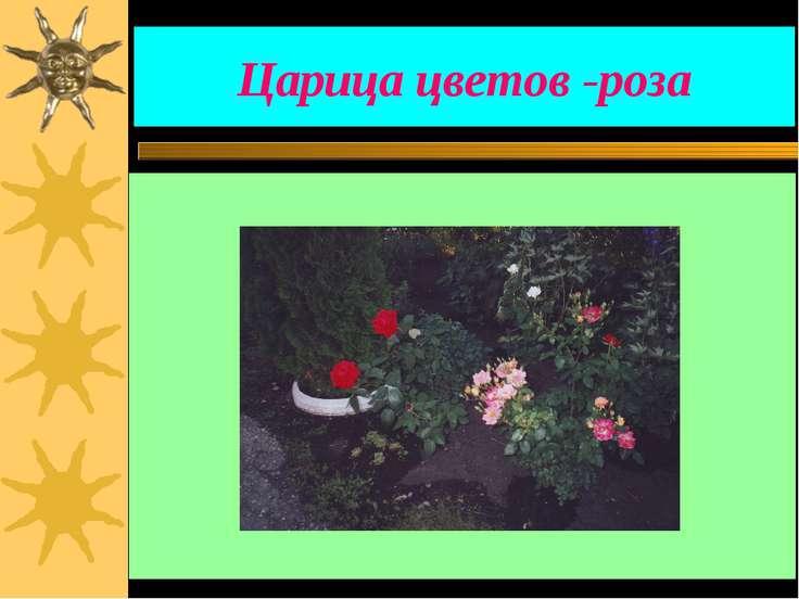 Царица цветов -роза