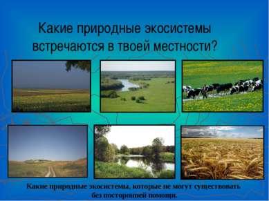 Какие природные экосистемы встречаются в твоей местности? Какие природные эко...