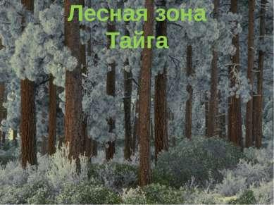 Лесная зона Лиственный лес