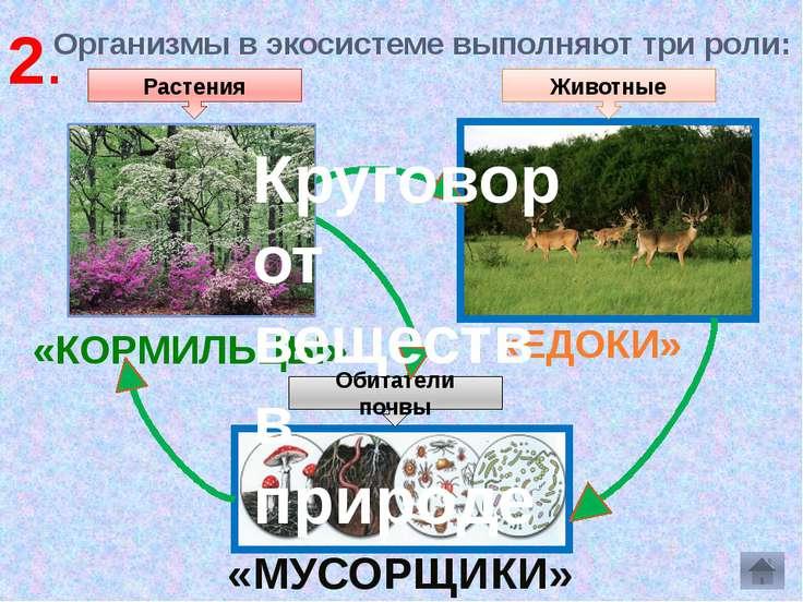 Организмы в экосистеме выполняют три роли: «КОРМИЛЬЦЫ» «ЕДОКИ» «МУСОРЩИКИ» Ра...