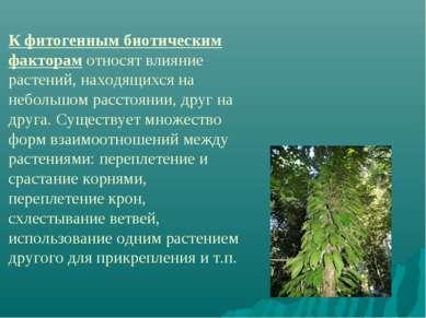 К фитогенным биотическим факторам относят влияние растений, находящихся на не...