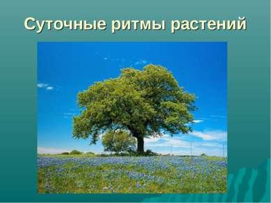 Суточные ритмы растений