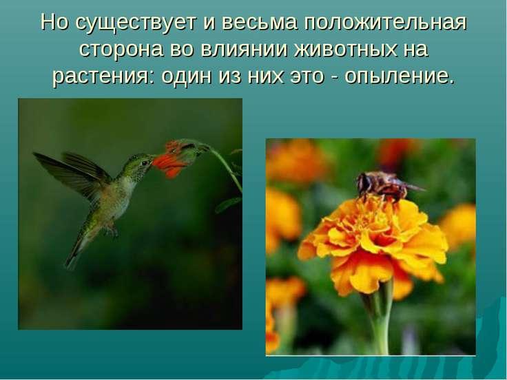 Но существует и весьма положительная сторона во влиянии животных на растения:...