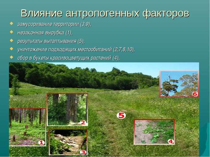 Влияние антропогенных факторов замусоривание территории (3,9), незаконная выр...