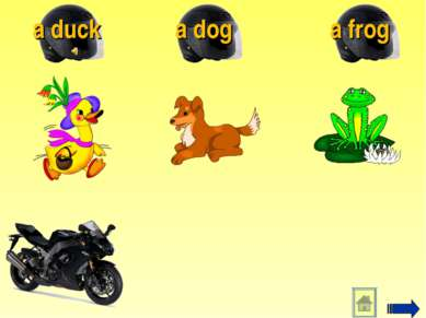 a frog a dog a duck