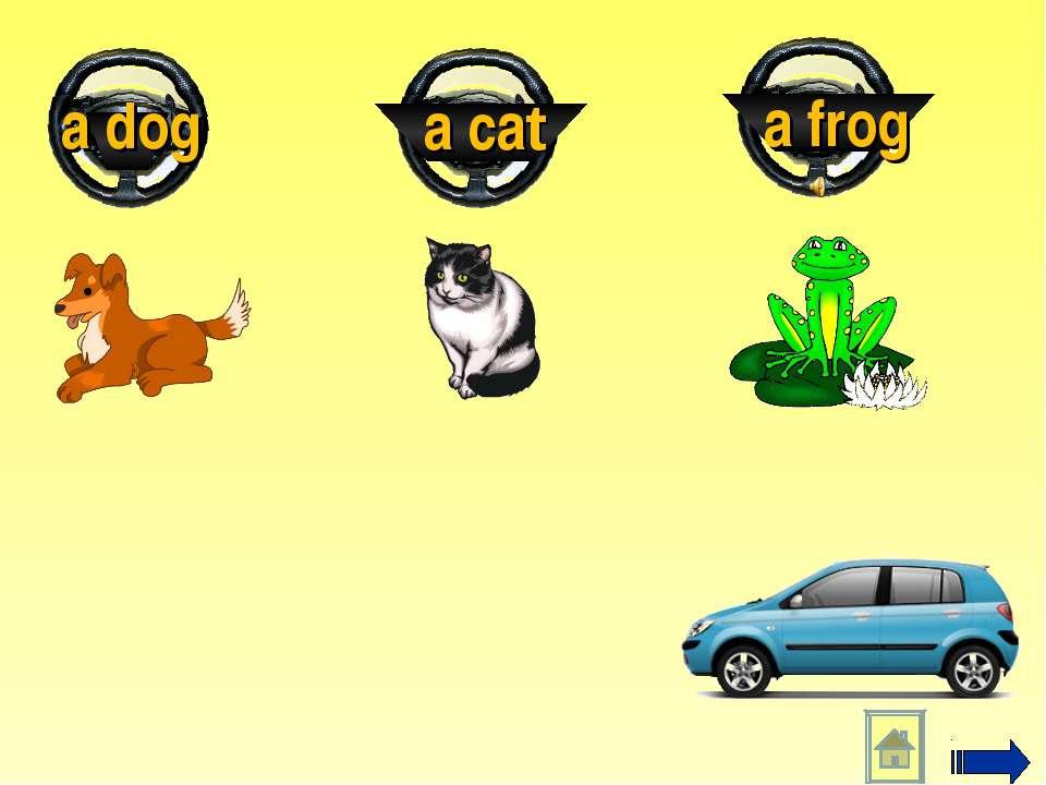 a frog a cat a dog
