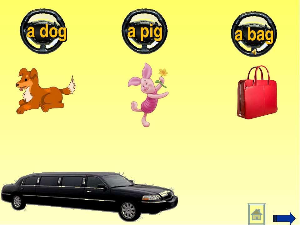 a bag a pig a dog