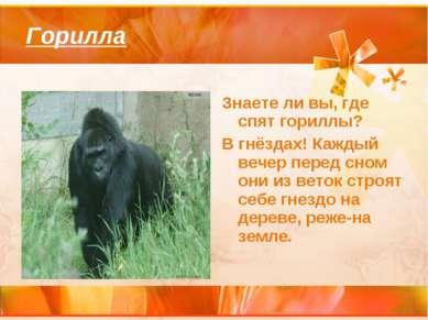 Горилла Знаете ли вы, где спят гориллы? В гнёздах! Каждый вечер перед сном он...