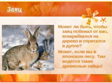 Заяц Может ли быть, чтобы заяц побежал от вас, вскарабкался на дерево и спрят...