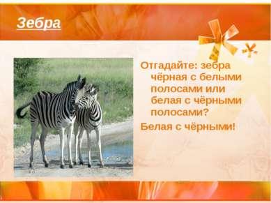 Зебра Отгадайте: зебра чёрная с белыми полосами или белая с чёрными полосами?...