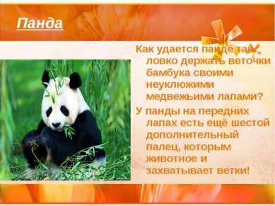 Панда Как удается панде так ловко держать веточки бамбука своими неуклюжими м...