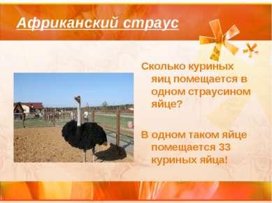 Африканский страус Сколько куриных яиц помещается в одном страусином яйце? В ...