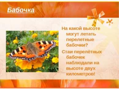 Бабочка На какой высоте могут летать перелетные бабочки? Стаи перелётных бабо...
