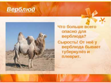 Верблюд Что больше всего опасно для верблюда? Сырость! От неё у верблюда быва...