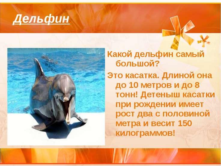 Дельфин Какой дельфин самый большой? Это касатка. Длиной она до 10 метров и д...