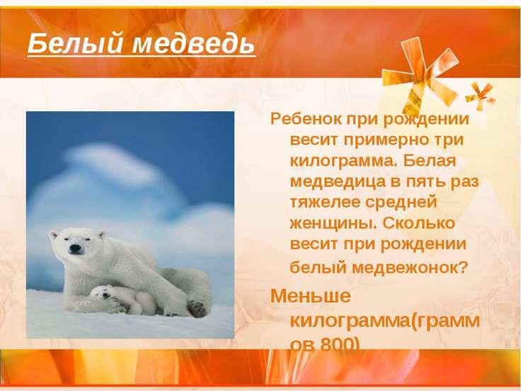Белый медведь Ребенок при рождении весит примерно три килограмма. Белая медве...