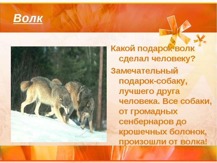Волк Какой подарок волк сделал человеку? Замечательный подарок-собаку, лучшег...