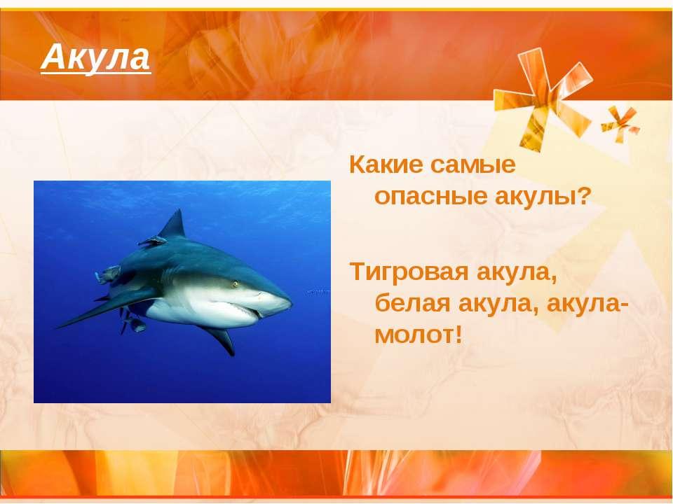 Акула Какие самые опасные акулы? Тигровая акула, белая акула, акула-молот!