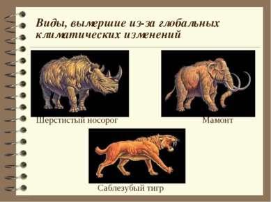 Виды, вымершие из-за глобальных климатических изменений Шерстистый носорог Ма...