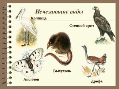 Исчезающие виды Выхухоль Колпица Дрофа Степной орел Аполлон