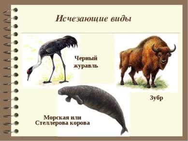 Зубр Исчезающие виды Морская или Стеллерова корова Черный журавль