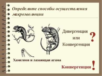Дивергенция или Конвергенция Конвергенция Хамелеон и лазающая агама Определит...