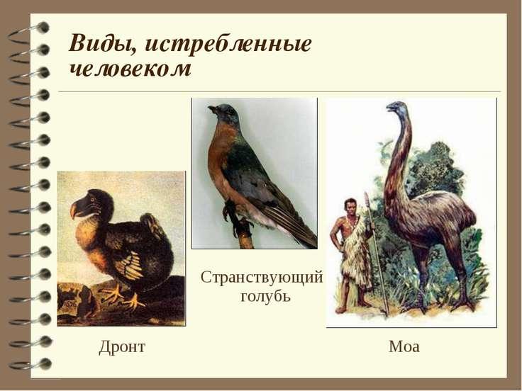 Виды, истребленные человеком Дронт Странствующий голубь Моа
