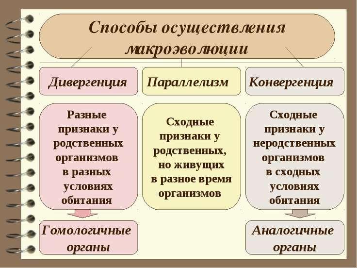 Способы осуществления макроэволюции Дивергенция Параллелизм Конвергенция Разн...