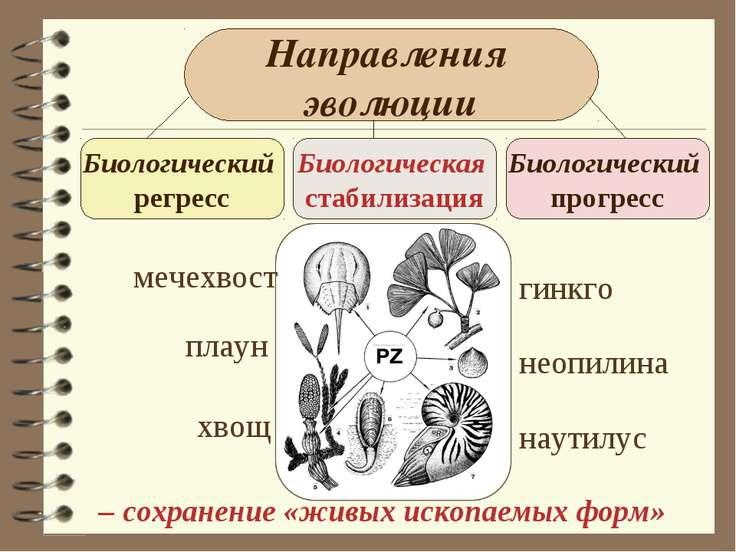 Направления эволюции Биологический регресс Биологическая стабилизация Биологи...
