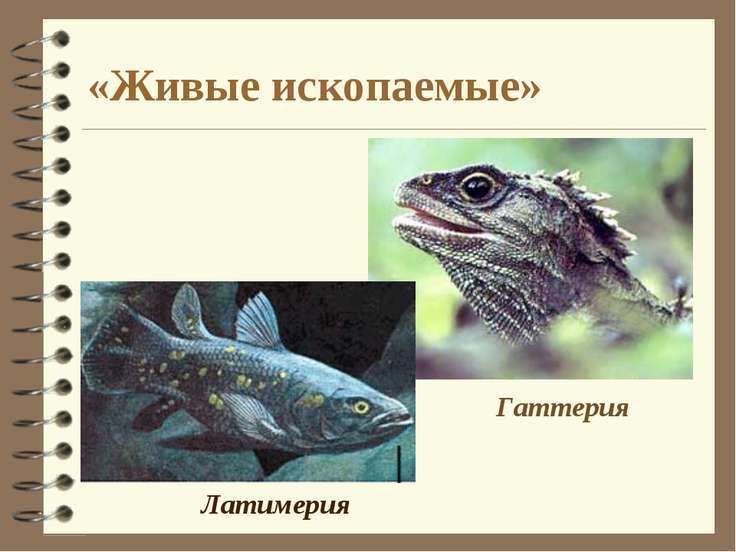 «Живые ископаемые» Латимерия Гаттерия