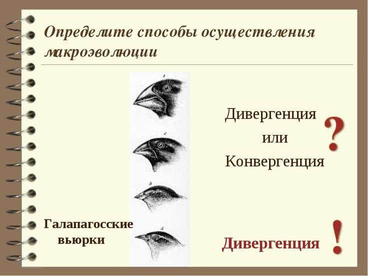 Дивергенция или Конвергенция Дивергенция Галапагосские вьюрки Определите спос...