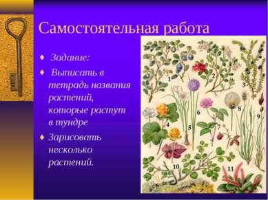 Самостоятельная работа Задание: Выписать в тетрадь названия растений, которые...